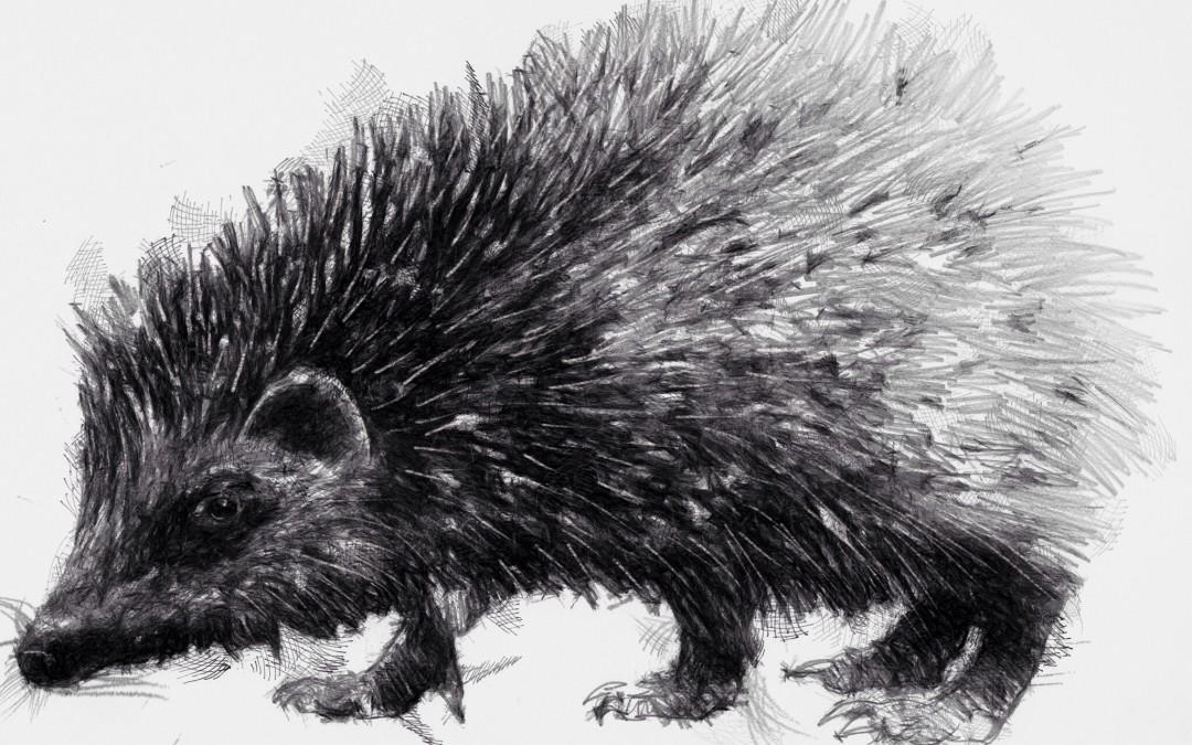 Hedgehog time