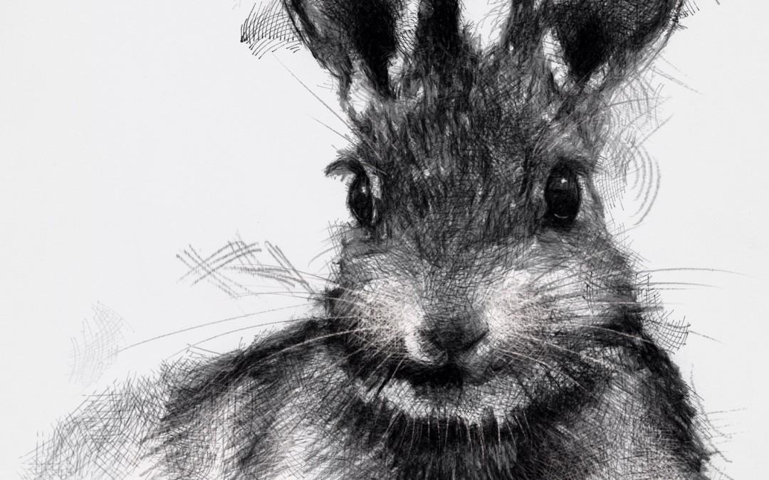 Another rabbit