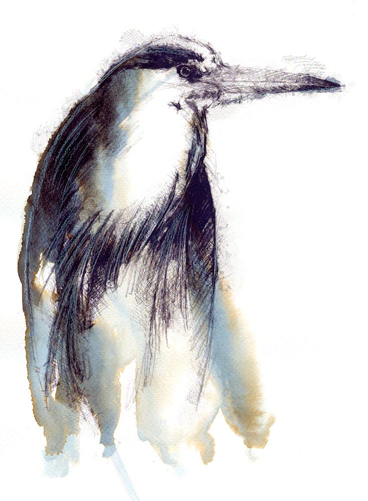 heron1