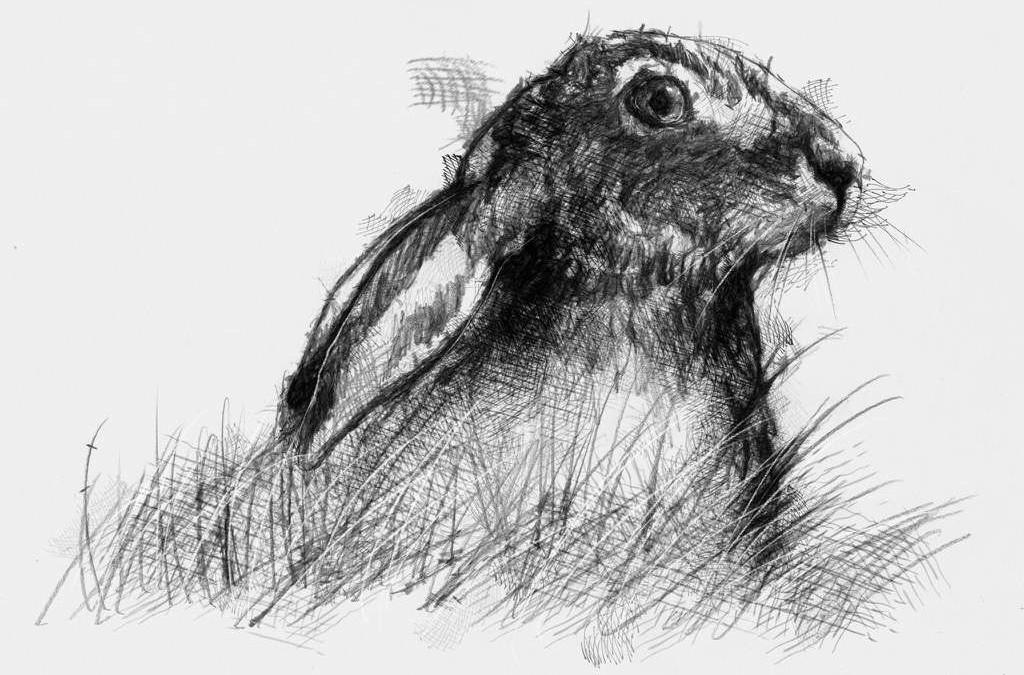 Hare alert