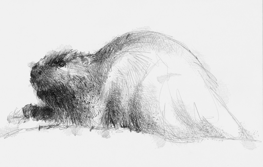 "This artwork was created by artist Sean Briggs all rights reserved. For futher information go to http://www.seanbriggs.co.uk/ þ6ý`0Kÿ5w‹9K)¹Fÿµ&ûJÿÿÿÿ4w@ CƤAP?""&""FÂ,"