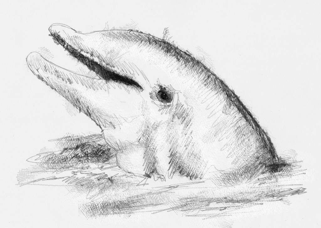 Dolphin   SeanBriggs
