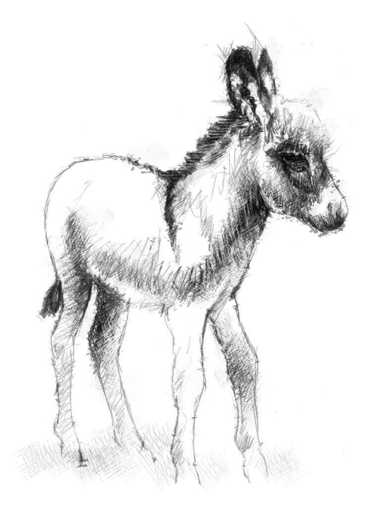 donkey3a