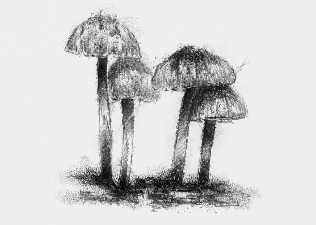 fungi1