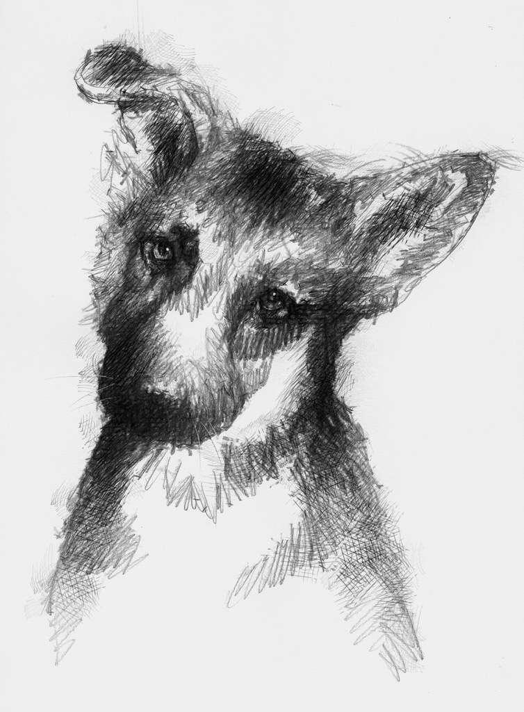 puppy1