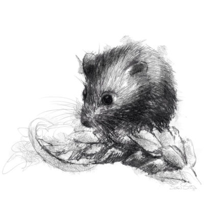 field_mouse
