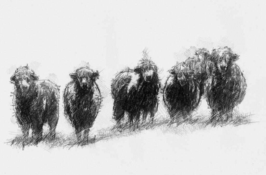 Sheep gang