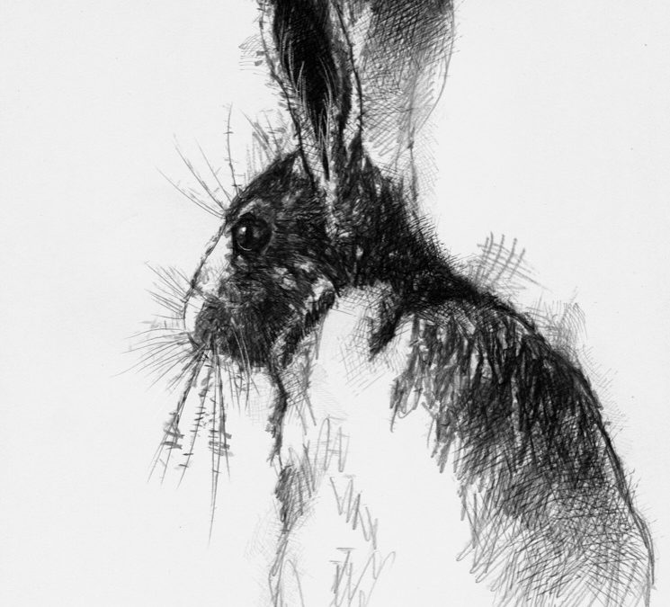 Old hare