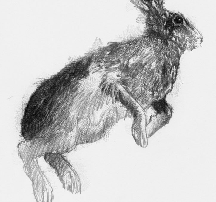 Hare leap