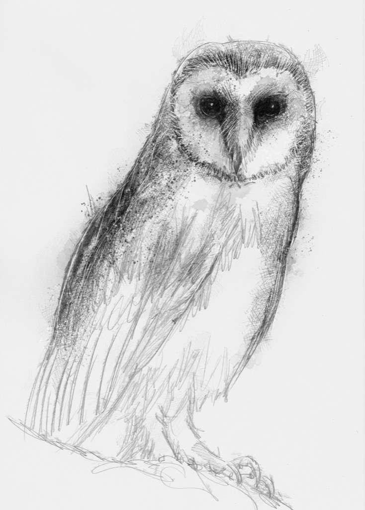 Barn Owl | | SeanBriggs